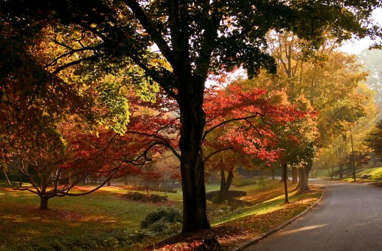 Brian Leon | Runnymede Park